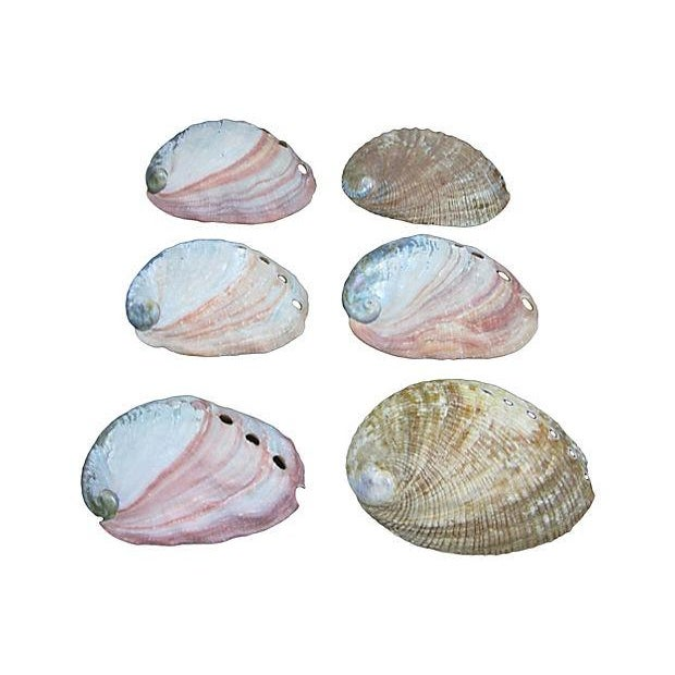 Vintage Mother-Of-Pearl Abalone Shells - Set of 6 - Image 2 of 5