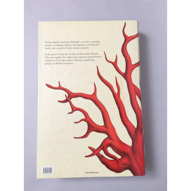 'Cabinet of Natural Curiosities' Oversized Coffee Table Book - Image 9 of 11