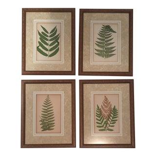 Vintage Original Framed Fern Prints - Set of 4