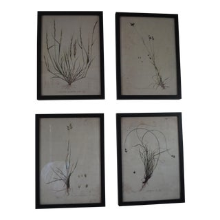 Botanical Black Framed Prints - Set of 4