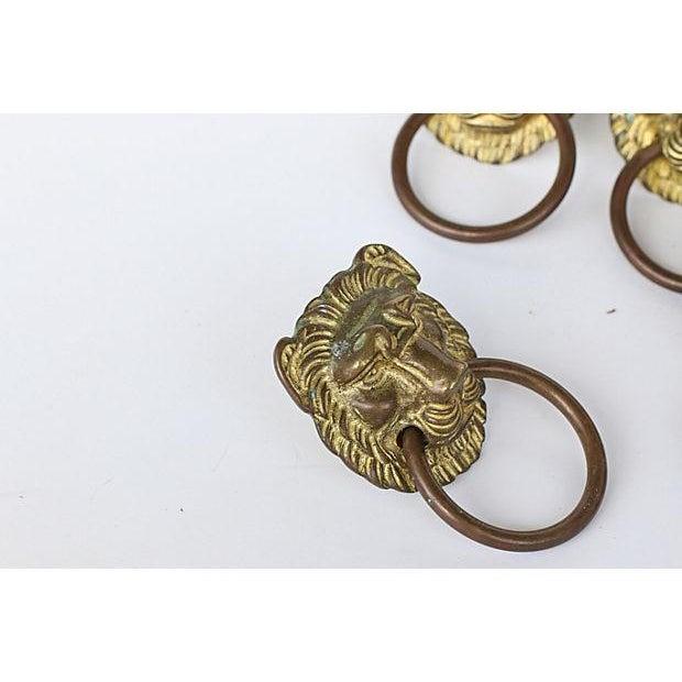 Solid brass lion head knobs set of chairish