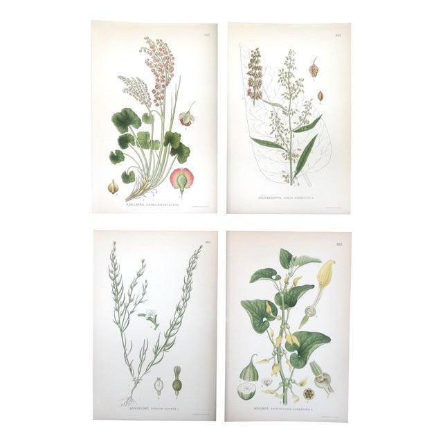 Swedish Floral Prints - Image 1 of 6