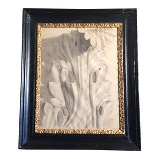 19th Cenury French Charcoal Leaf Drawing