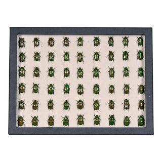 Sarreid LTD Beetles Collection Box