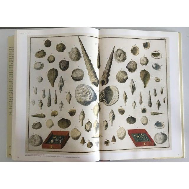 Cabinet of Curiosities by Albertus Seba - Image 5 of 11