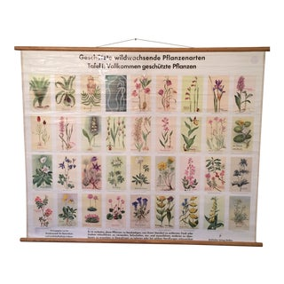 German Botanical Endangered Species Chart