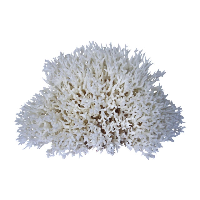 Image of Natural Birdsnest Coral Fragment