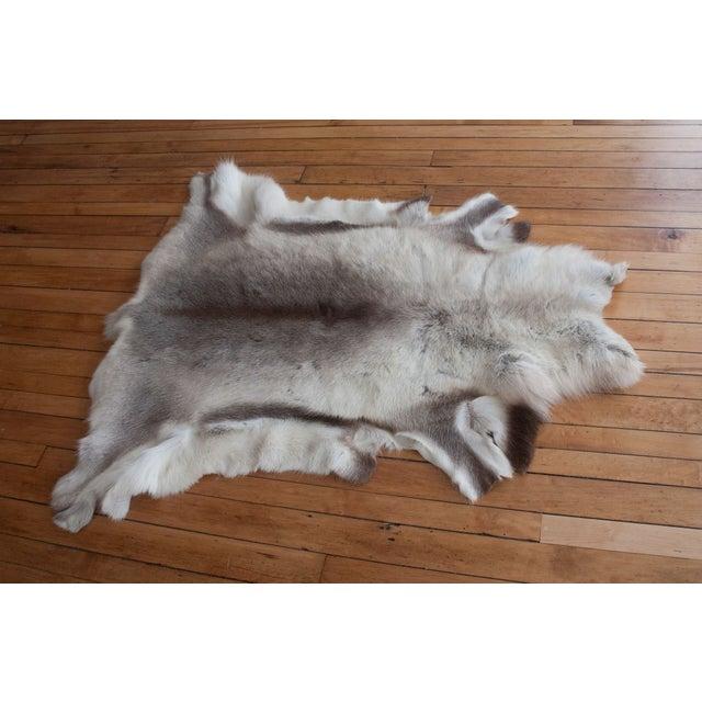 Luxurious Reindeer Fur Throw - Image 2 of 4
