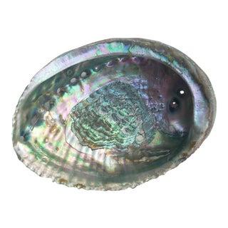 Nautical Iridescent Abalone Shell