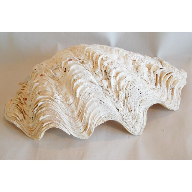 Antique Nautical Seashell Clamshell - Image 10 of 11