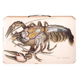 Vintage School Graphic Lobster Chart