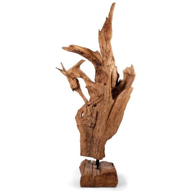 Asian Wild Teak Tree Root Sculpture - Image 6 of 9