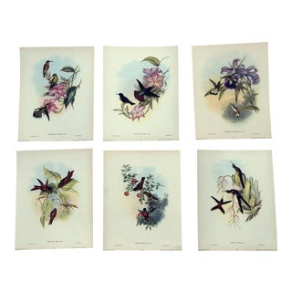 John Gould Hummingbird Lithographs, 1940s - Set of 6