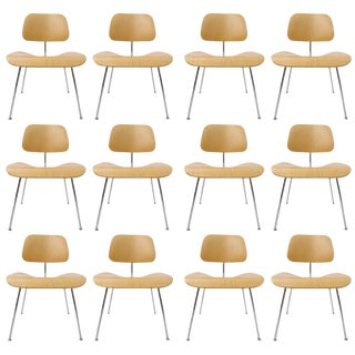 OVER 100 Charles Eames DCM Bent Plywood & Steel Chairs for Herman Miller in White Ash