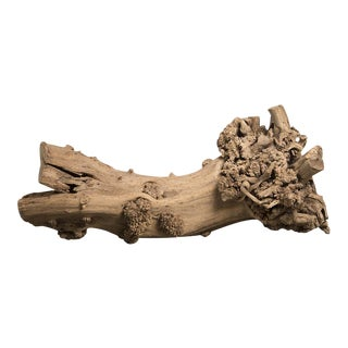 Burled Walnut Tree Trunk Sculpture, Found in France, circa 1900