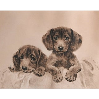 Vintage Dachshund Puppies Etching