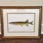 Image of Antique Framed Fish Print