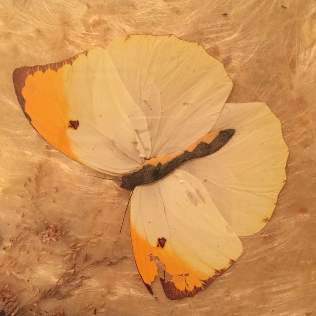 Pressed Butterfly and Gold Leaf Tray - Image 5 of 7