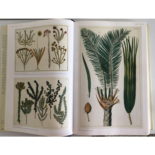 Cabinet of Curiosities by Albertus Seba - Image 7 of 11