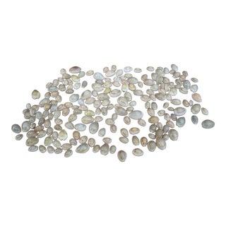 Natural Money Cowrie Seashells - Set of 200