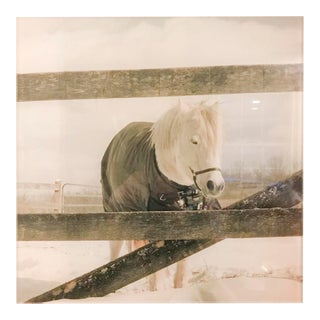 Acrylic Mounted Snowy Horse Photograph