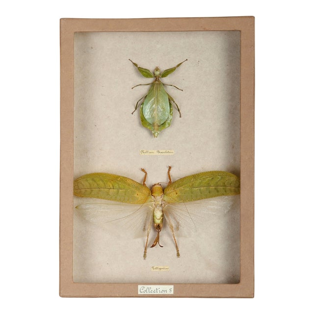 Sarreid LTD Moth Shadow Box - Image 1 of 3