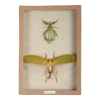 Sarreid LTD Moth Shadow Box