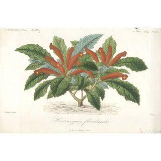 "Francois Herincq ""Hernicquia Floribunda"" 1864 Lithograph"