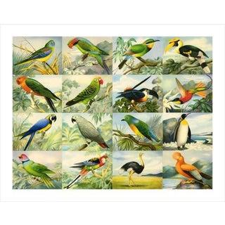 Vintage '16 Birds' Archival Print
