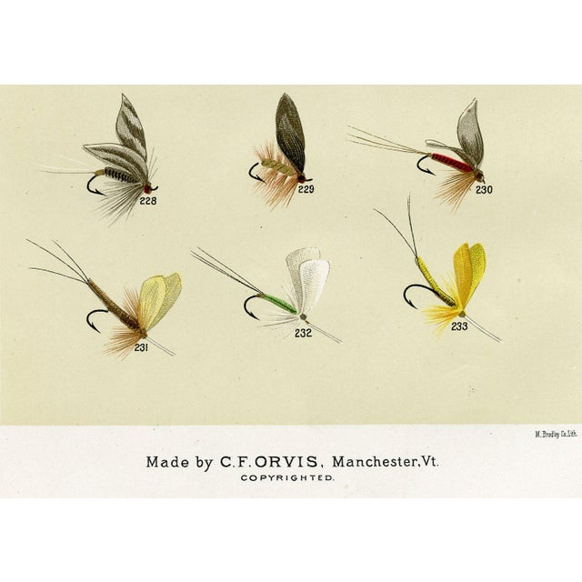 Image of Antique 'Trout Fishing Flies' 1st Edition Print