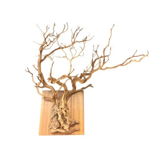 Natural Sprawling Tree Root Wall Hanging