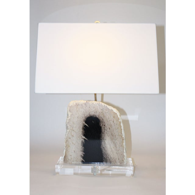 Image of Petrified Palm Wood Lamp
