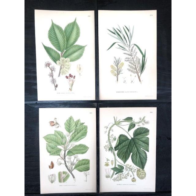 1922 Vintage Swedish Floral Prints - Set of 4 - Image 2 of 6
