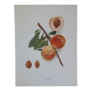 Agricultural Guide Worthen Peaches Lithograph