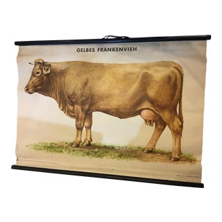 1920 German Cow Lithograph on Canvas