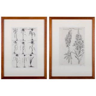 1719 De Bry Botanical Engravings - a Pair