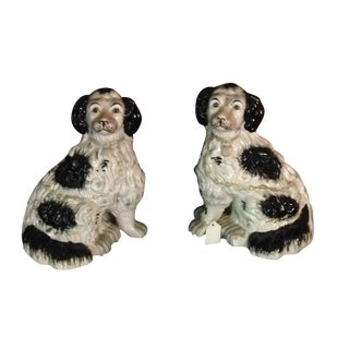 Black and White Staffordshire Spaniels Dogs