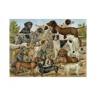 Antique 'Dog Breeds 1' Archival Print