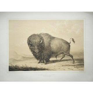 "Vintage ""Buffalo Grazing"" Serigraph- George Catlin"