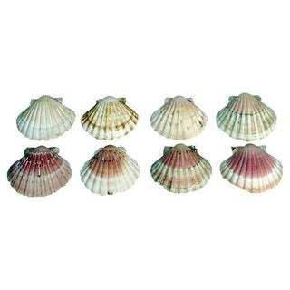 Natural Pink-Hued Shell Serving Dishes - Set of 8