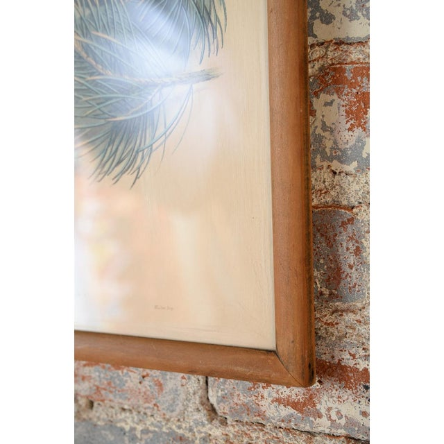 "John Gould ""Ciconia Nigra-Black Stork"" Bird Print - Image 7 of 7"