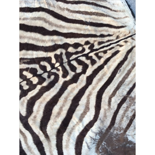 Vintage Zebra Hide Rug - Image 4 of 7