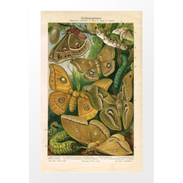 Vintage Moths & Caterpillars Archival Print - Image 1 of 3