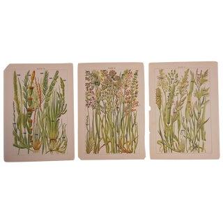 """Group of 3 Antique Botanical Lithos 5""""x8"""""""