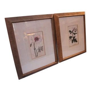 Antique English Botanical Engravings - Pair