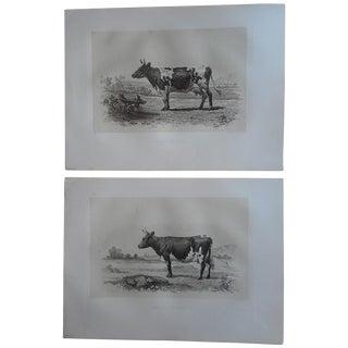 Antique Cow & Bull Engravings- Pair