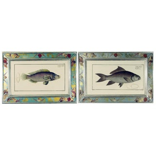 Engravings of Fish by Marcus Bloch