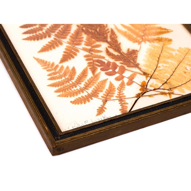 Image of Pressed Fern Wall Hanging