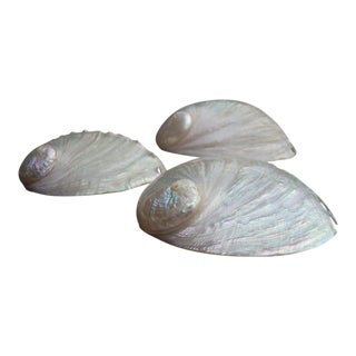 Natural Iridescent Abalone Seashells - Set of 3
