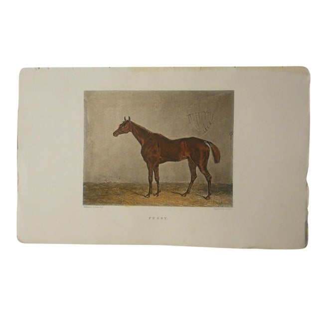 Antique Horse/Equine Engraving, Hand Colored - Image 1 of 3